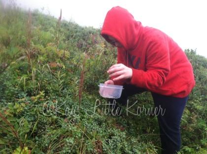 picking blueberries